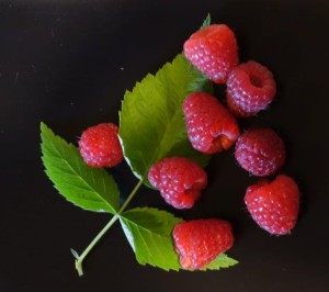 Vente et cueillette de petits fruits près d'Angers, Maine-et-Loire