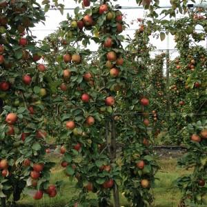 Vente directe de pommes bios et petits fruits, près d'Angers, en Maine-et-Loire